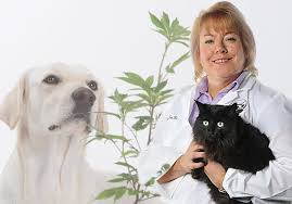 Veterinarians Recommend the Use of CBD in Pets