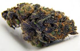 BlackBerry Kush Marijuana Strain