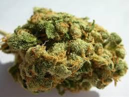Jack Herer marijuana