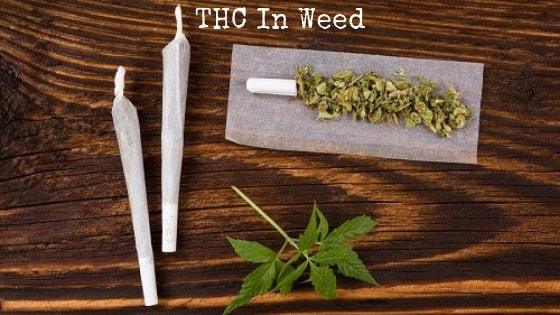 THC in weed