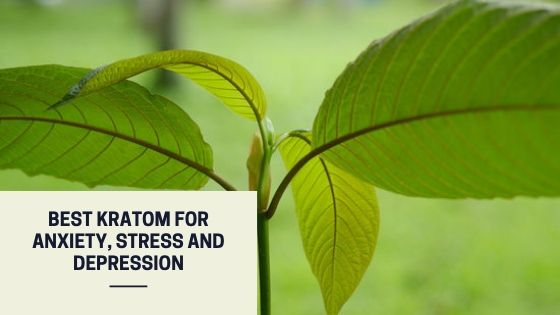 Best Kratom for anxiety, stress and depression
