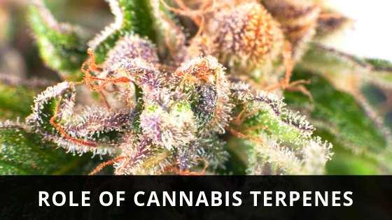 Role Cannabis Terpenes