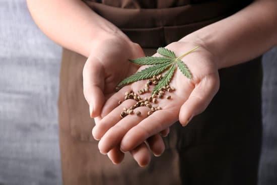 hemp seeds for weight loss