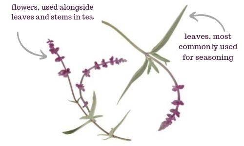 Salvia Tea Guide