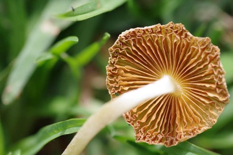 Grow Magic Mushrooms