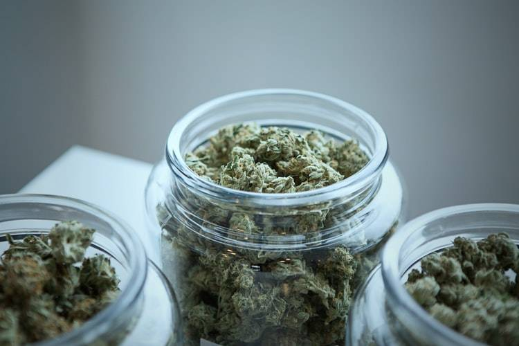 Cannabis Misconceptions