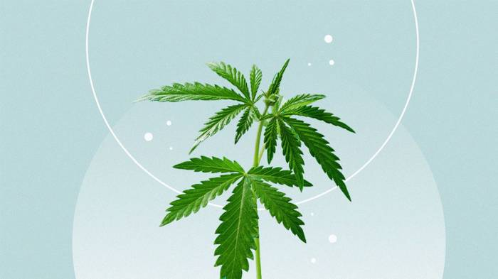Cannabis Mints