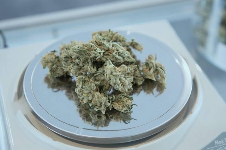 Edible Weed